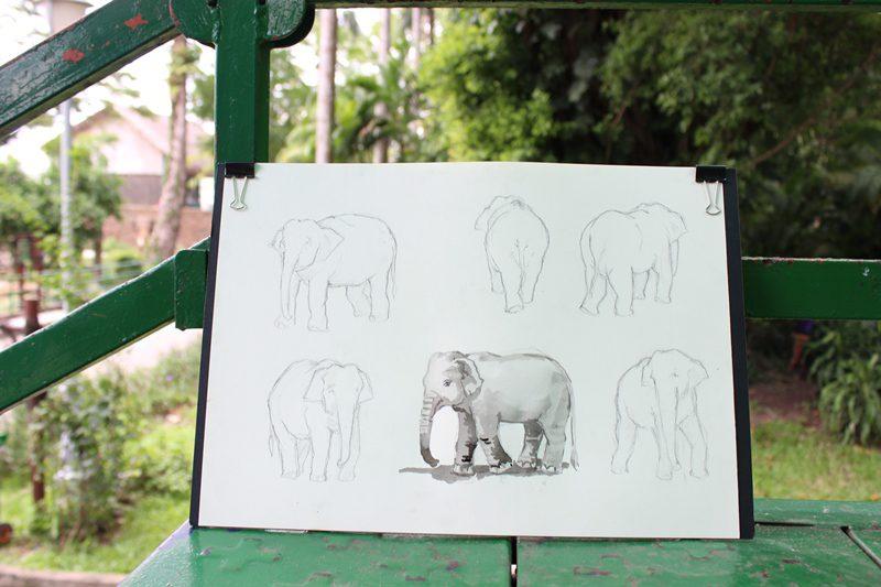 dạy vẽ động vật