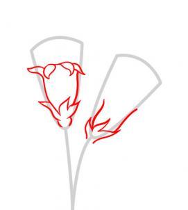 6 bước vẽ hoa cẩm chướng – biểu tượng quốc gia Slovenia - cực đẹp (6)
