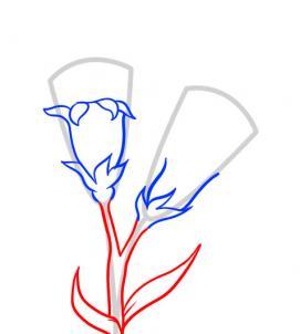 6 bước vẽ hoa cẩm chướng – biểu tượng quốc gia Slovenia - cực đẹp (7)