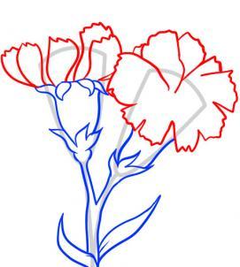 6 bước vẽ hoa cẩm chướng – biểu tượng quốc gia Slovenia - cực đẹp (8)