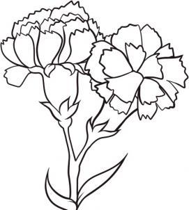 6 bước vẽ hoa cẩm chướng – biểu tượng quốc gia Slovenia - cực đẹp (10)