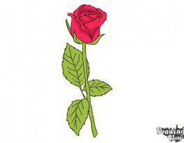 10 bước vẽ hoa hồng đơn giản cho người mới bắt đầu 10