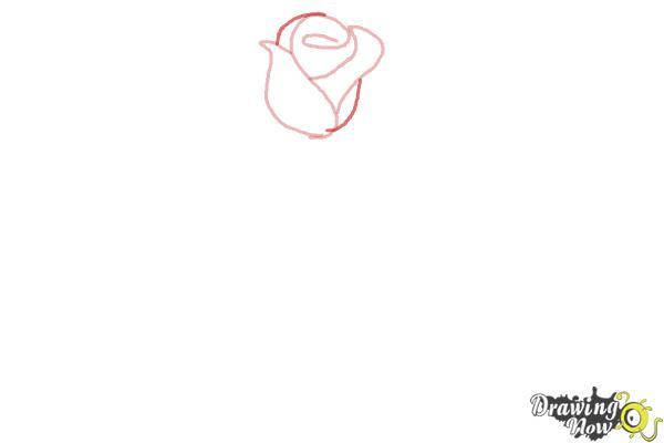 10 bước vẽ hoa hồng đơn giản cho người mới bắt đầu 3