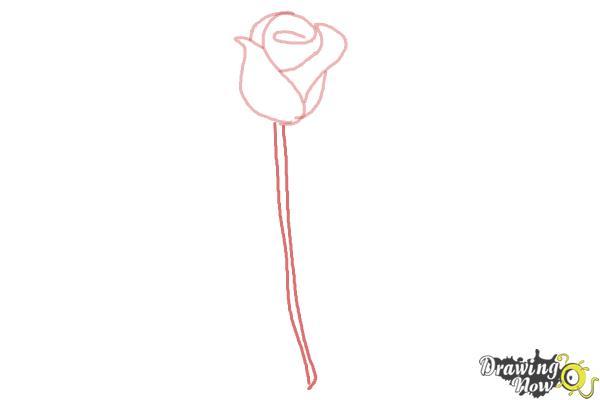 10 bước vẽ hoa hồng đơn giản cho người mới bắt đầu 4