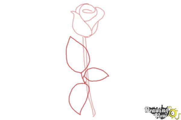 10 bước vẽ hoa hồng đơn giản cho người mới bắt đầu 5