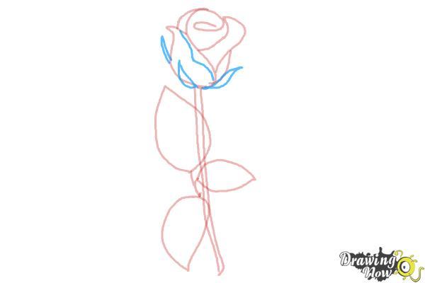 10 bước vẽ hoa hồng đơn giản cho người mới bắt đầu 6