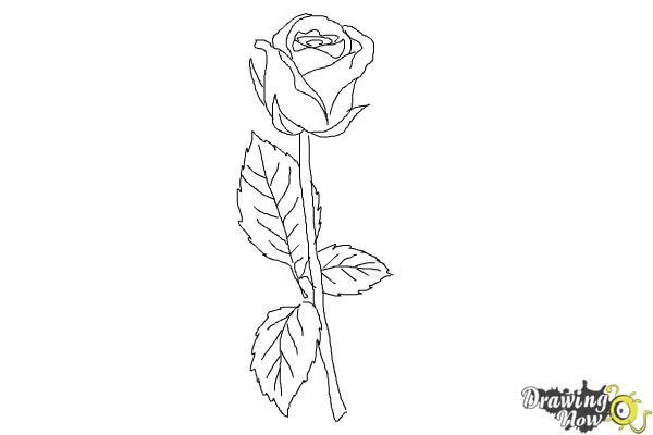 10 bước vẽ hoa hồng đơn giản cho người mới bắt đầu 9