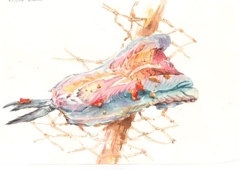 Thực tế Nam Du Watercolor Khương Thảo 19