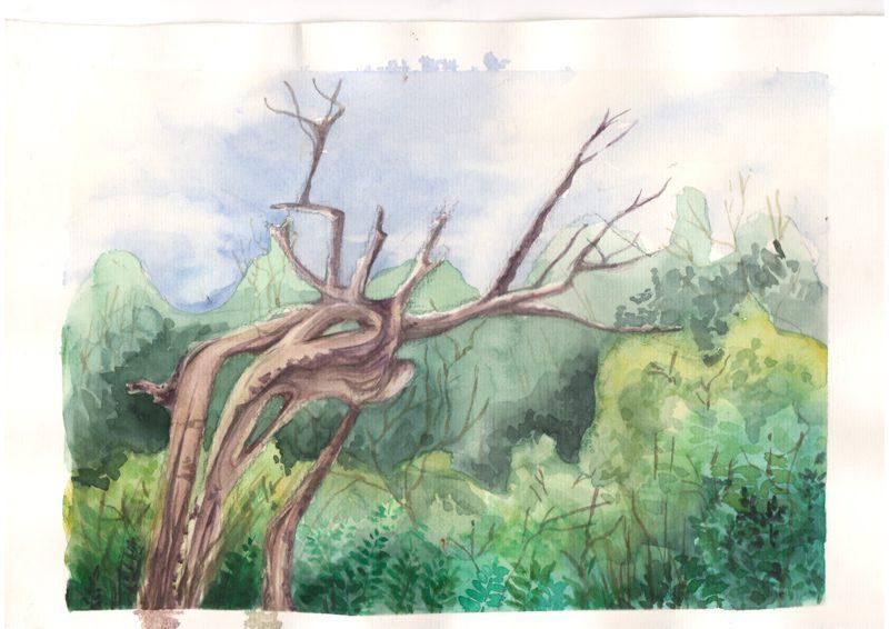 Thực tế Nam Du Watercolor Khương Thảo 4