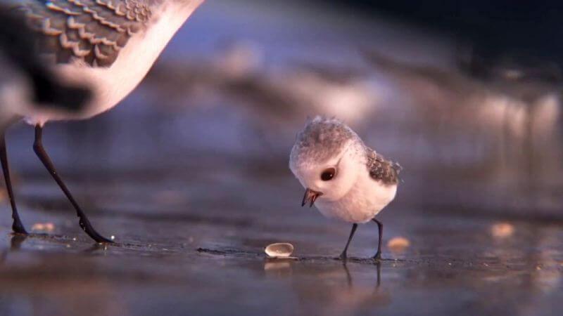 Piper câu chuyện đằng sau bộ phim chú chim nhỏ dũng cảm 10