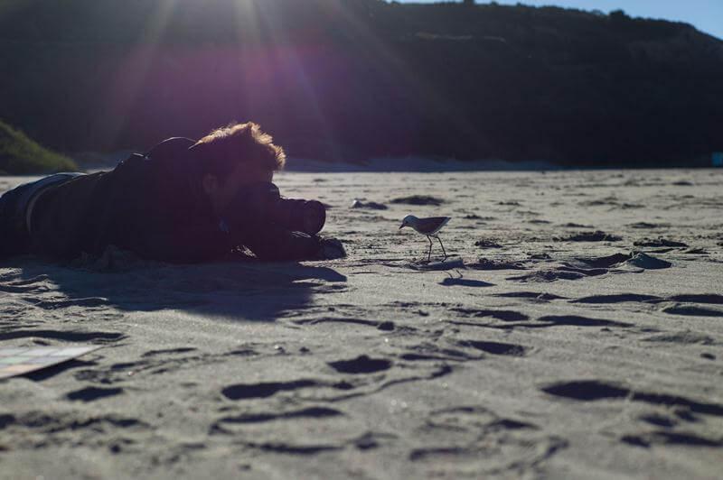 Piper câu chuyện đằng sau bộ phim chú chim nhỏ dũng cảm 16