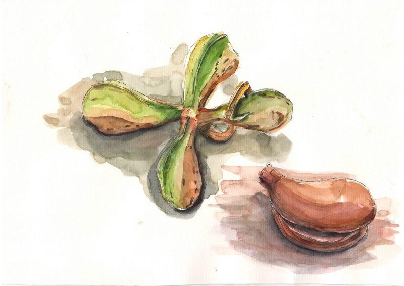 Thực tế Nam Du watercolor Nguyễn Thanh Triều 3