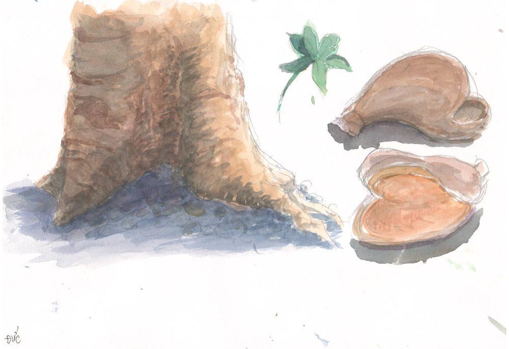 Tranh vẽ Màu nước - Phan Hồng Đức 9